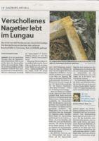 thumbnail of (2021-07-22) Verschollenes Nagetier lebt im Lungau