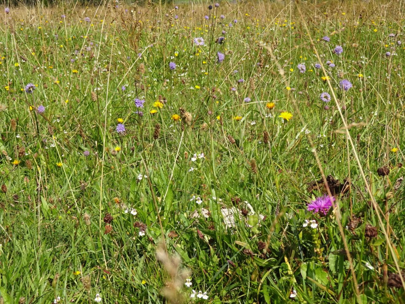 Wilde Blumen braucht das Land!