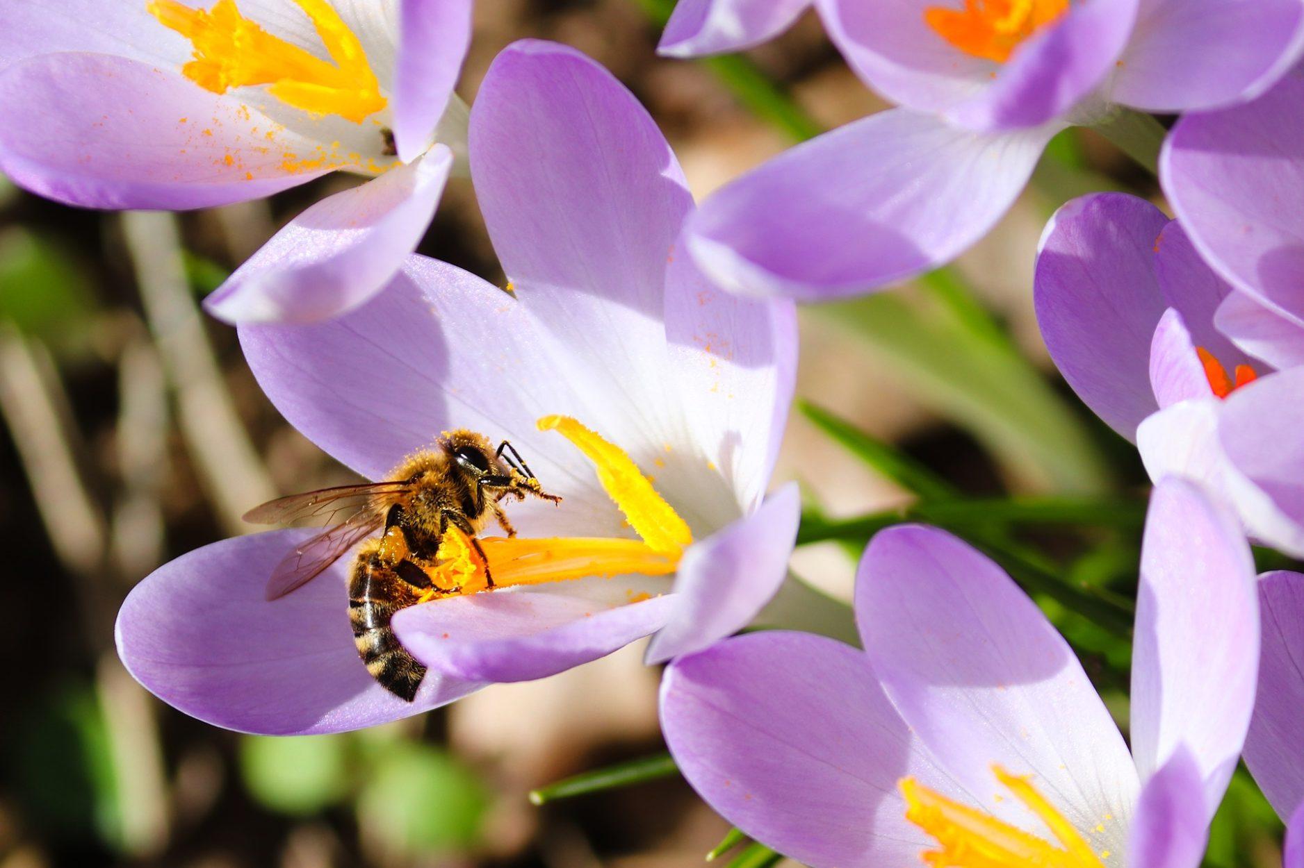 04.11.2019 - Vortrag: Bienen verstehen - Bienen unterstützen